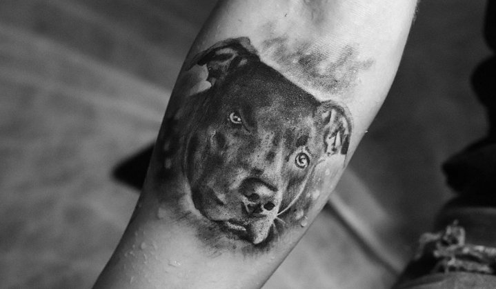 Tatuagem de Pitbull: Significado, Características e Ideias de Tattoos